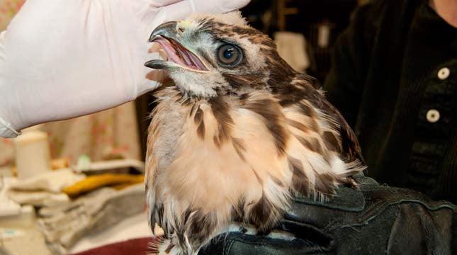 Photo: Audubon Society