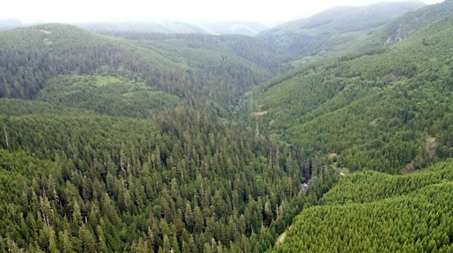 The Canyon Creek area is steep and mountainous with heavy timber and brush.  (Photo: AIR 12)