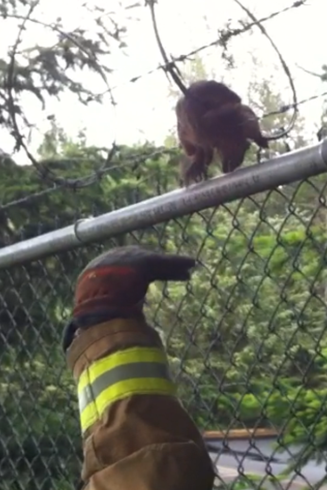 Squirrel Stuck
