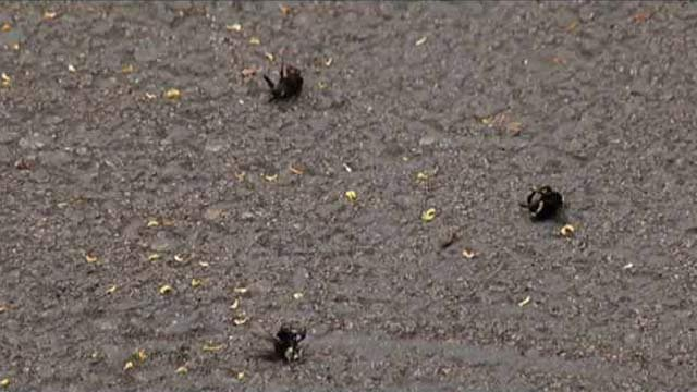 50,000 bees were found dead in Wilsonville, then hundreds more were found dead in Hillsboro.