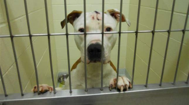 Photo: Cowlitz County Animal Control
