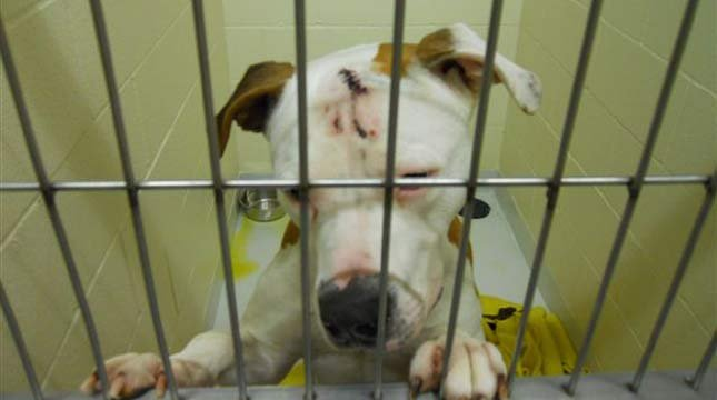 Photo: Humane Society of Cowlitz County