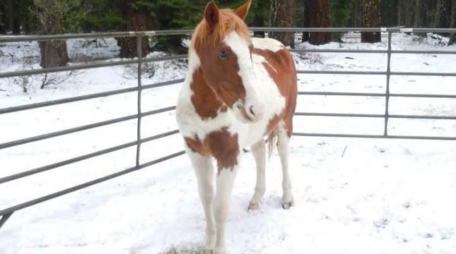 St. Nick, the rescued horse. Photo: Sound Equine Options