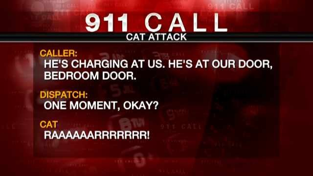 """He's got kind of a history of violence,"" Lee Palmer told a 911 dispatcher. ""He's kind of a violent cat already. But he's really bad right now."""