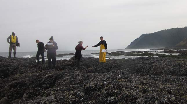 Undergraduate students at Oregon State University assist in monitoring the intertidal zone on the Oregon coast for damage done by sea star wasting syndrome. (Photo by Elizabeth Cerny-Chipman, courtesy Oregon State University)