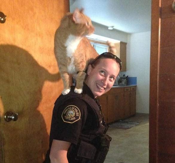 Cat in home that was burglarized stays on shoulder of Portland police officer. (Photo: Portland Police Bureau)