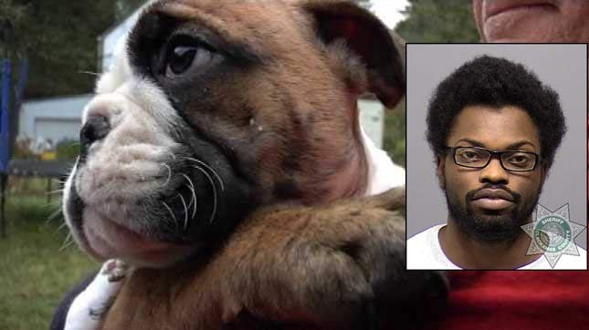 Man who stole English bulldog puppy at gunpoint convicted again