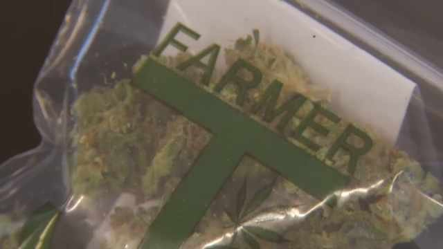 Your Vote: Oregon Marijuana Measure Qualifies for November Ballot