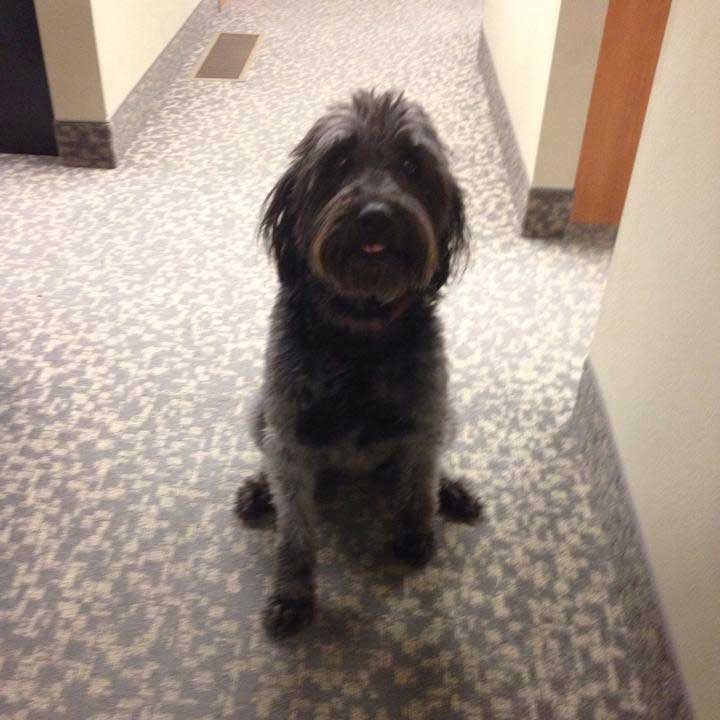 Stanley helps soothe patients at Santiam Hospital