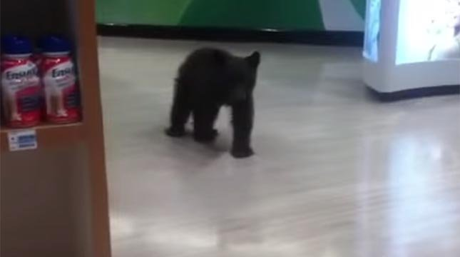 Black bear cub wanders aisles of Rite-Aid store in Oregon