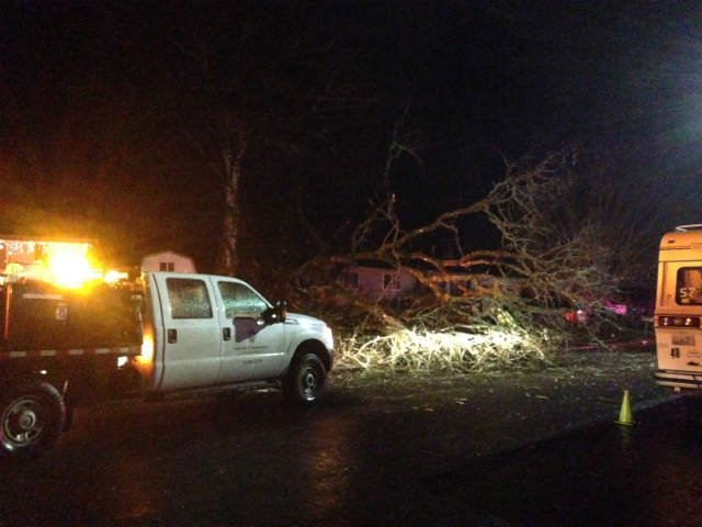Tree splits in half and lands on a home in Aloha