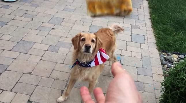 Image: www.youtube.com/fritzdog