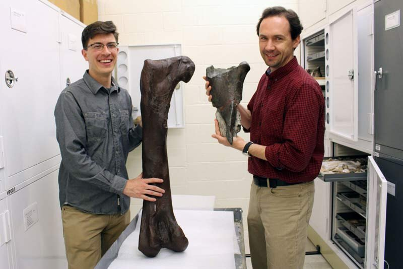 Dr. Christian Sidor, Burke Museum curator of vertebrate paleontology, and Brandon Peecook, University of Washington graduate student, show the size and placement of the fossil fragment compared to the cast of a Daspletosaurus femur. Credit: Photo Courtesy