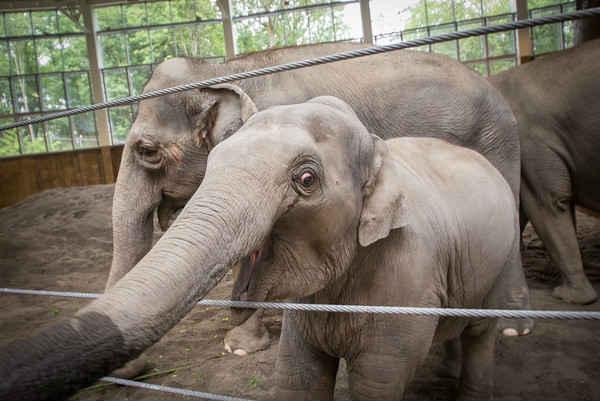 Photo Oregon Zoo
