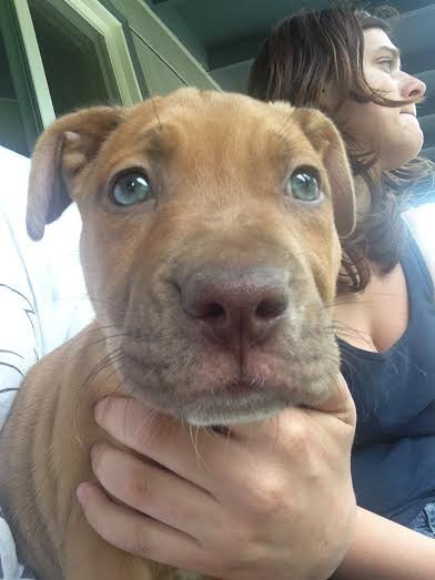 Puppy stolen from outside of a SE Portland store