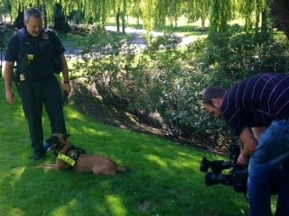 PPB K-9 Lola and Officer Alex Fyfe with Fox 12.