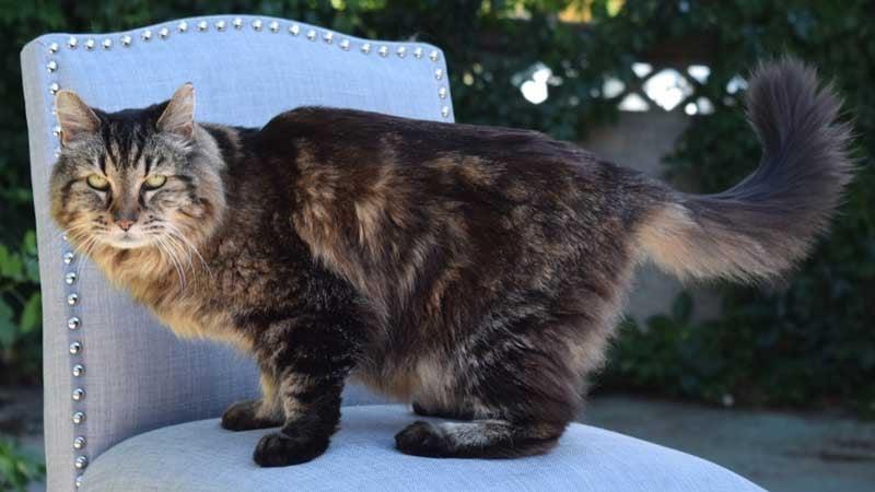 Corduroy the cat (Photo: CNN)