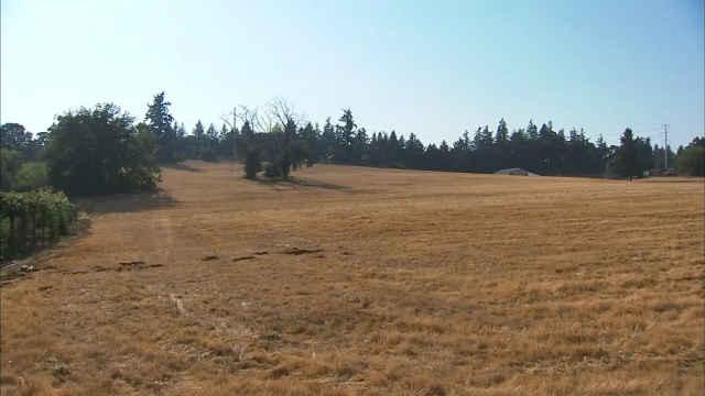 Field where big cat was spotted near Ellen Lane Community Garden