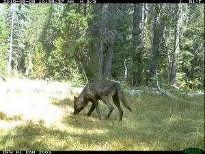 Photo: California Department of Fish & Wildlife