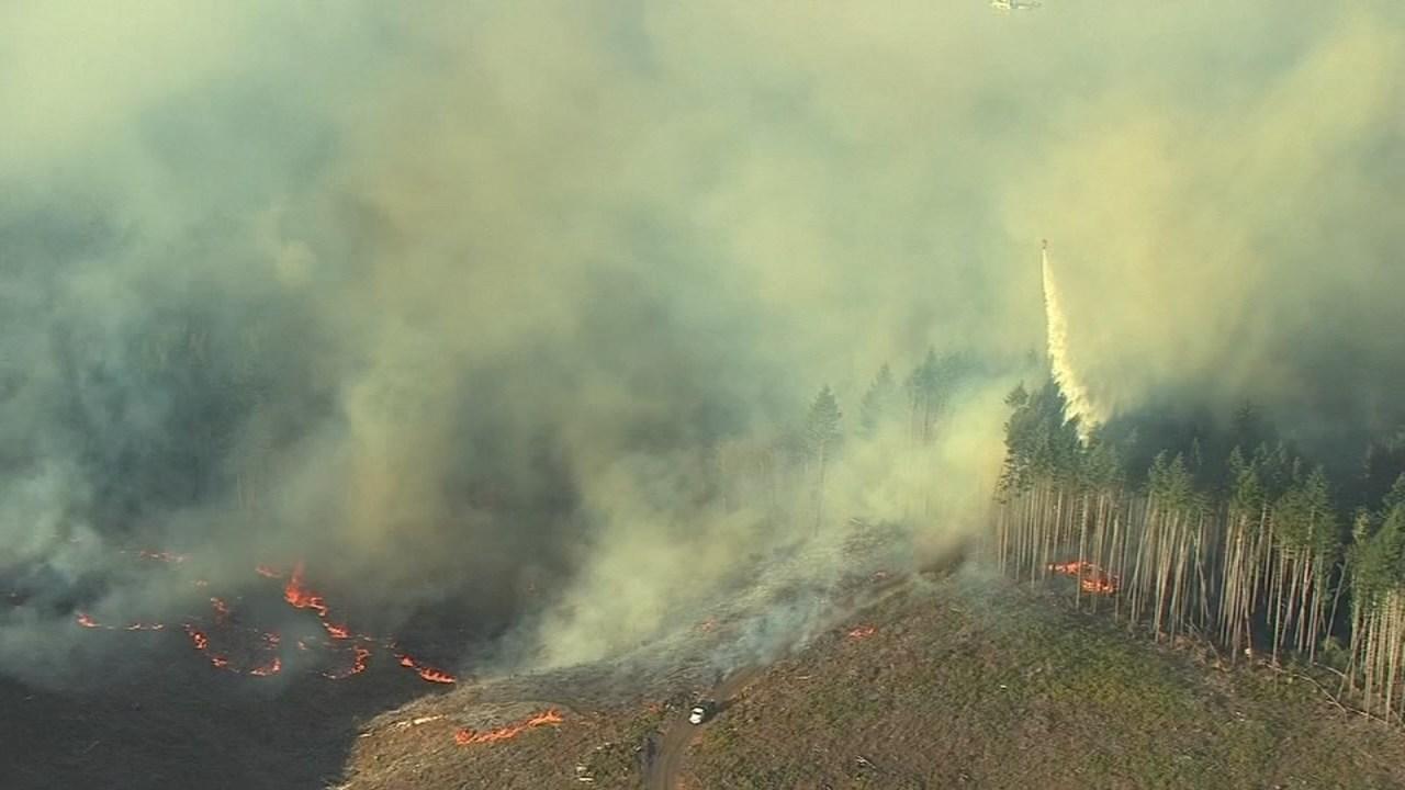 Willamina Creek Fire