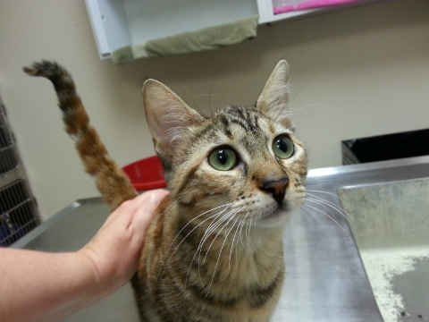 Five-month old kitten Jenna is being treated for ringworm at the Cat Adoption Team. (Photo: Cat Adoption Team)