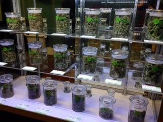 Marijuana on the shelves at Pure Green on NE Sandy.