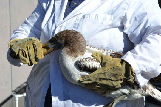 Rare Tropical Bird Rehabilitated At Oregon Coast Aquarium