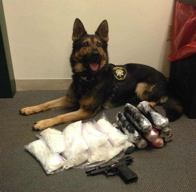 K-9 with evidence collected from meth trafficking investigation (Photo: Washington County Sheriff's Office)