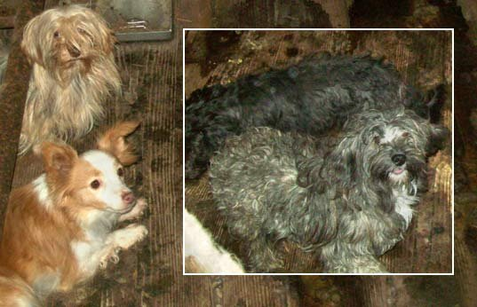 Dogs found in deplorable conditions in Rainier in November 2013.