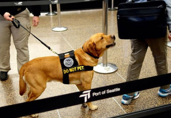 Photo: Transportation Security Administration