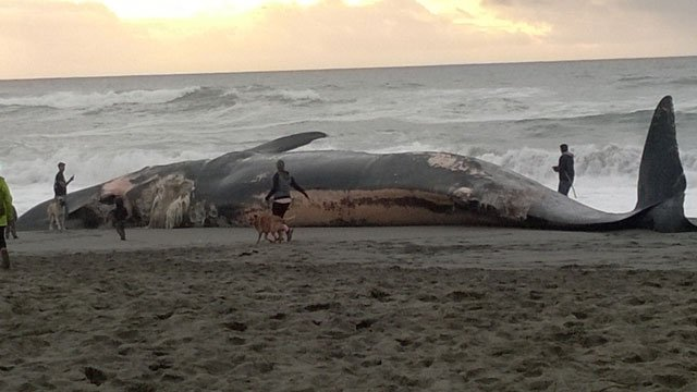 Beached Whale Long Island