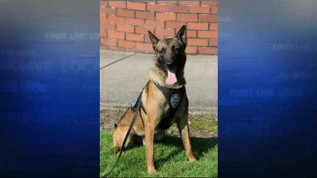 K9 Tripp (Photo: Vancouver Police Department)