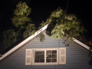 The tree that crashed onto the home April Correa rents in Milwaukie.