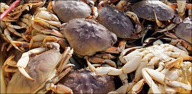 Washington state crab season results autos post for Crab fishing oregon