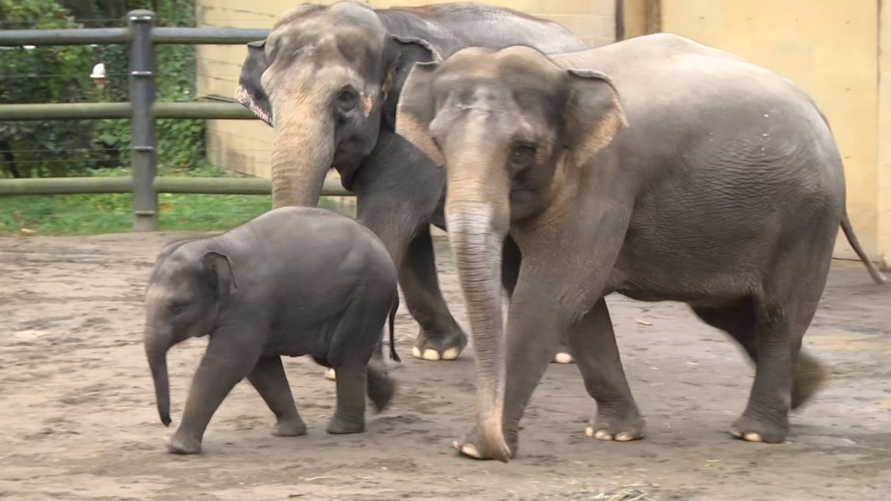 Lily the Oregon Zoo's baby elephant (file image)