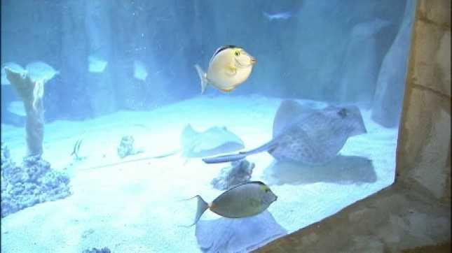 Portland Aquarium, file image