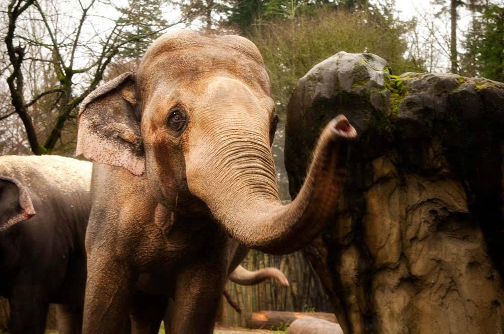 Tusko (Photo: Oregon Zoo)