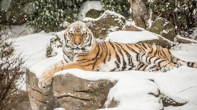(Photo courtesy: Oregon Zoo)