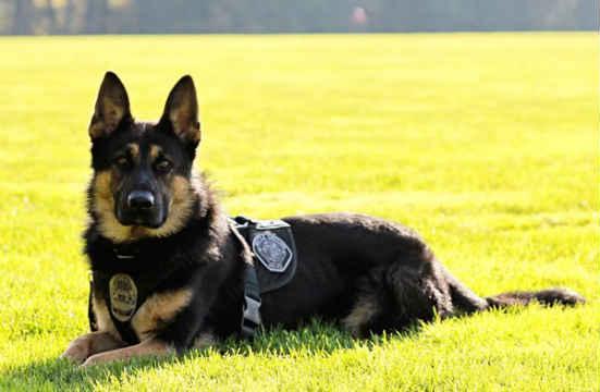 Battle Ground Police Dept. K9 Luca
