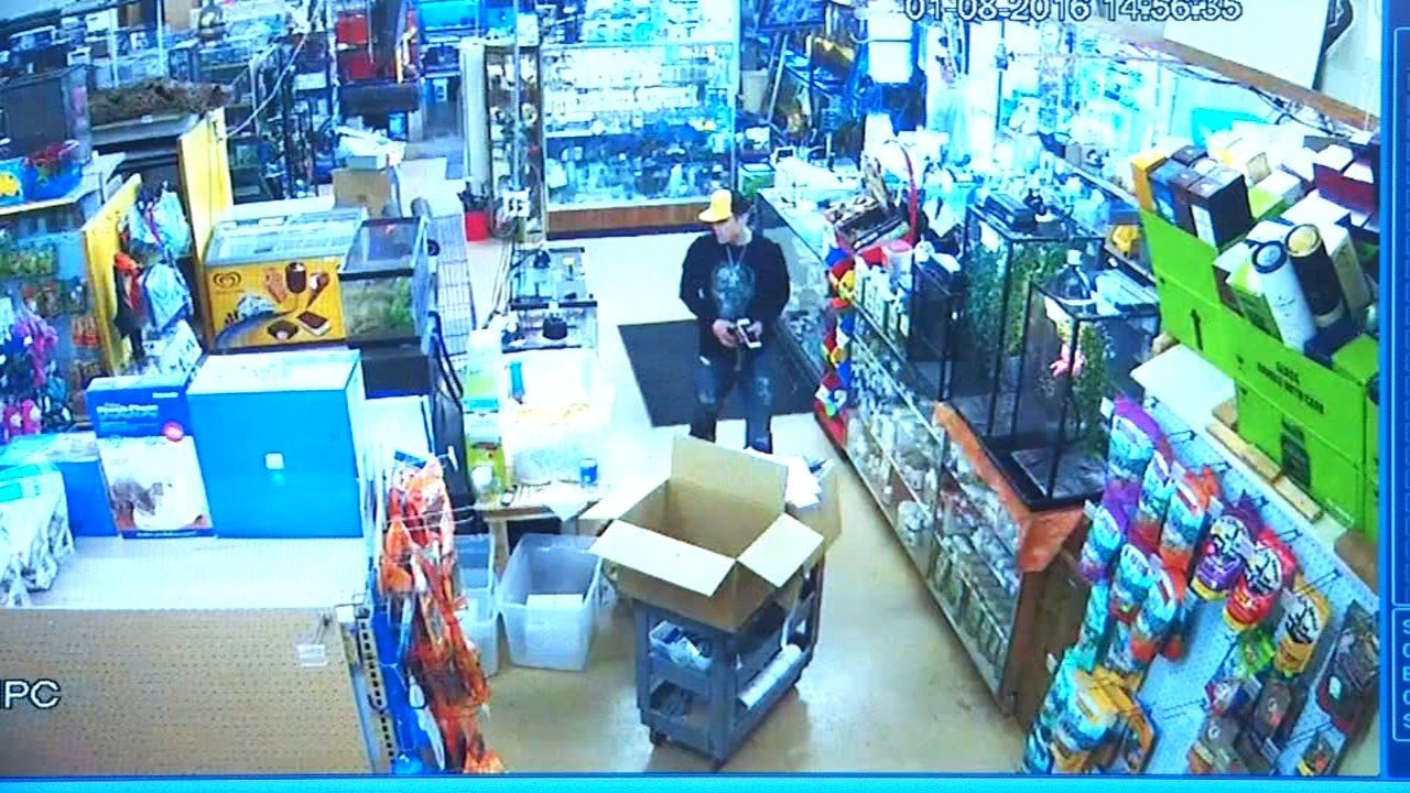 Snake theft suspect caught on camera at A to Z Pets in southeast Portland.