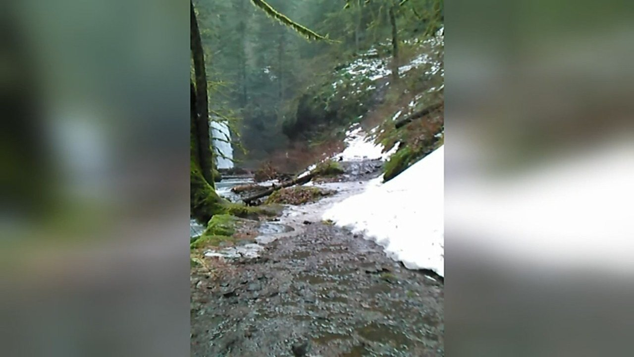 Picture of the trail (Photo: Tyler Kondash)