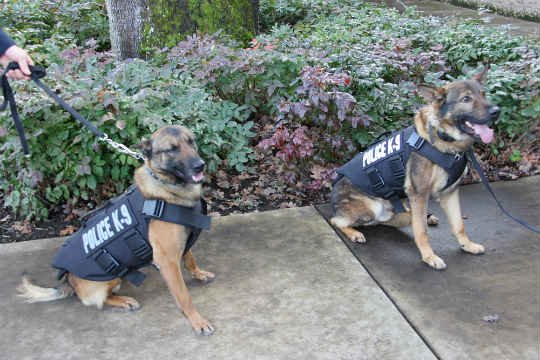 Vancouver Police K9s Ivar and Tripp. (Photo: Vancouver Police Department)
