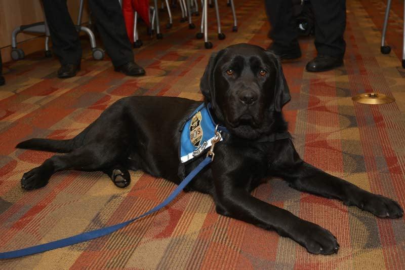 Zeus, Portland Fire & Rescue's new arson dog