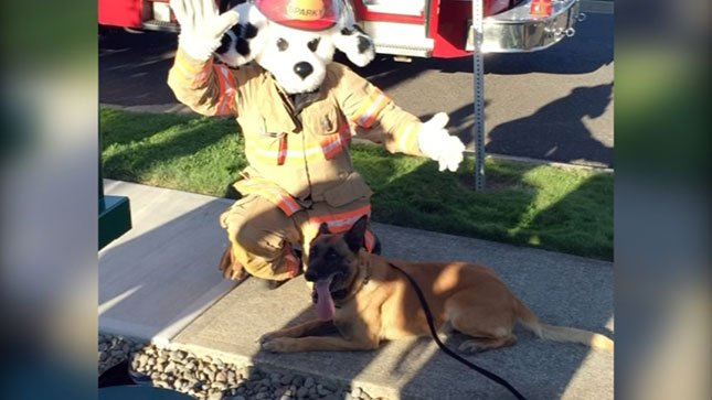 K9 Max with the Clackamas County Fire Dept. mascot (Photo: Clackamas County Sheriff's Office)