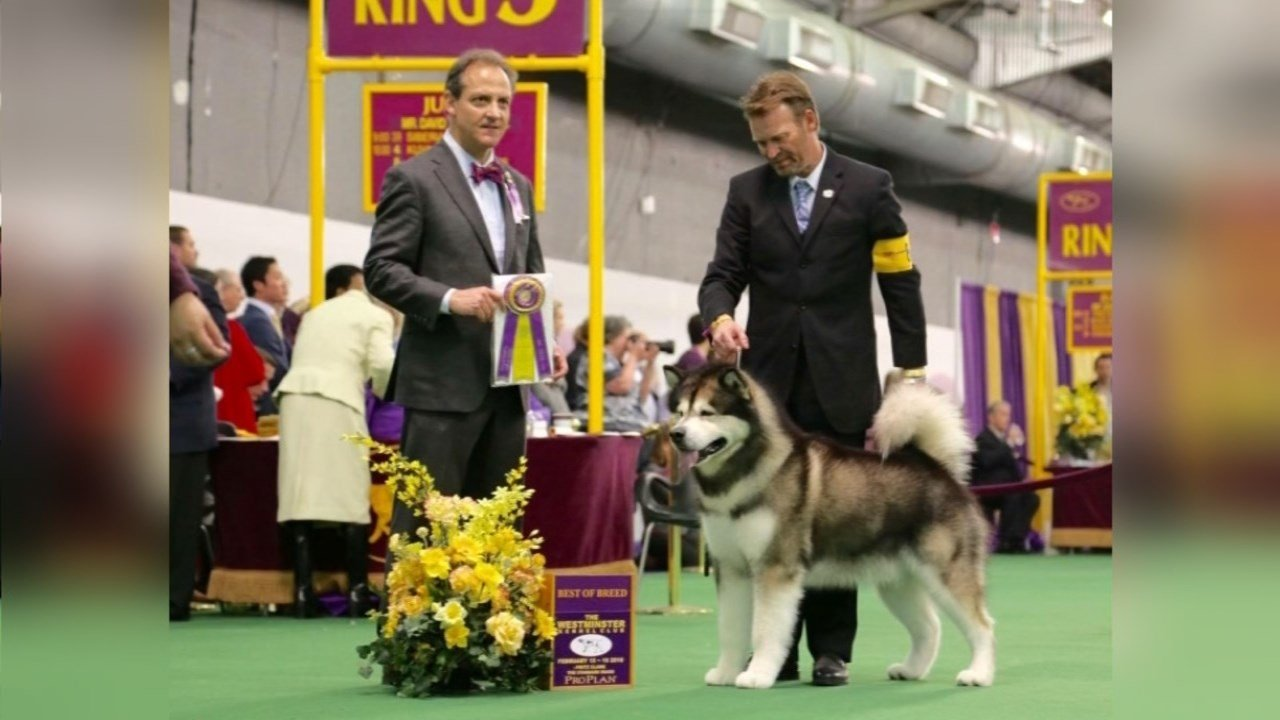 Mick after winning Best in Breed on Tuesday.