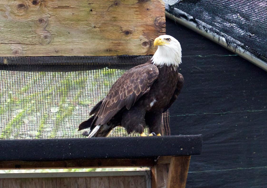 Photo by Ali Berman, courtesy of Audubon Society of Portland.