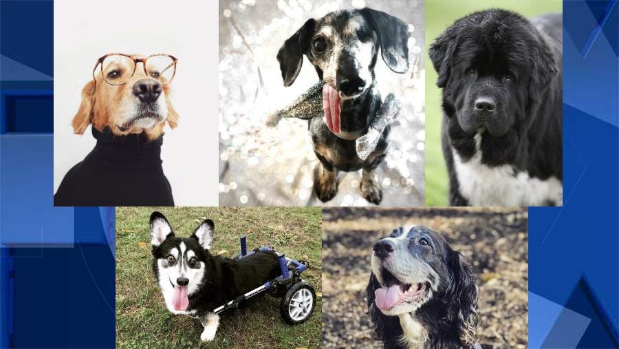 Some of the finalists selected for the Portland Rose Festival Canine Court. (Rose Festival)