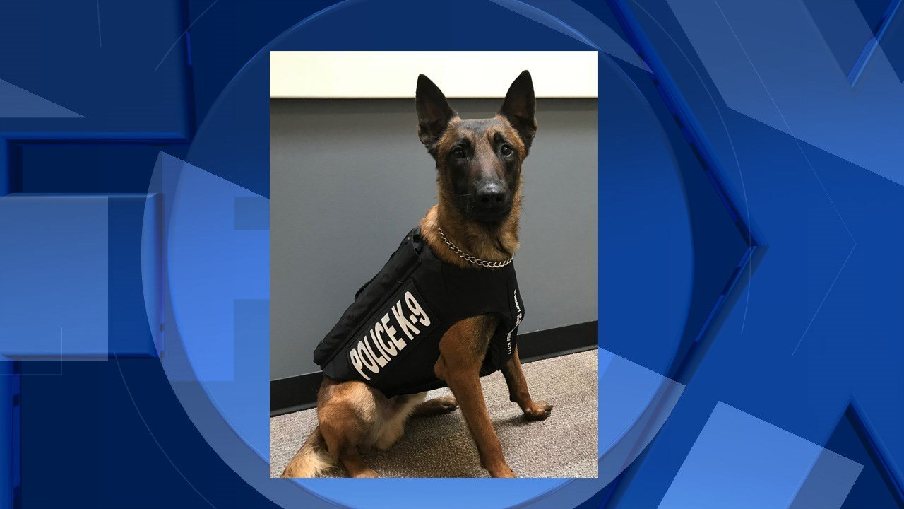 K-9 Dozer (Hillsboro Police Department)